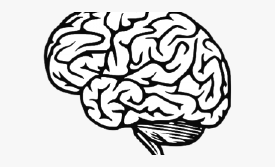 Brain Clipart Jpeg.