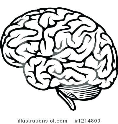 Brain Coloring Page Sheet Ask A Biologist Human Ideas Pages Book B.