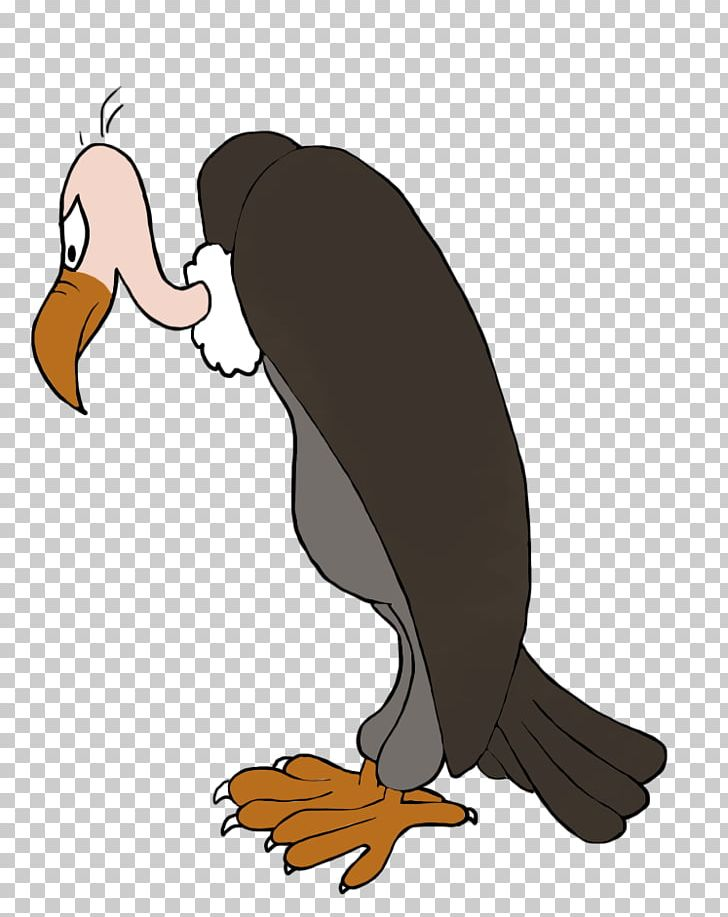 Duck Beaky Buzzard Turkey Vulture PNG, Clipart, Animals, Beak, Beaky.
