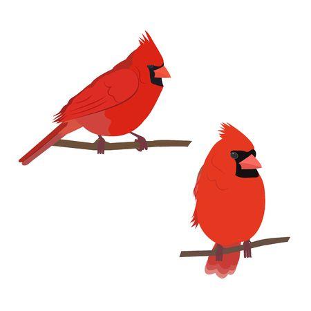 1,904 Cardinal Bird Cliparts, Stock Vector And Royalty Free Cardinal.