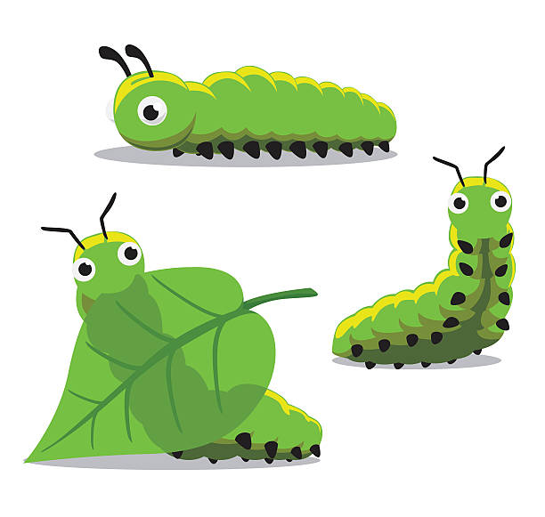 Best Caterpillar Illustrations, Royalty.