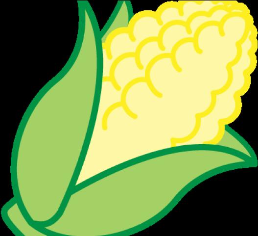 Corn Clipart Rice Corn.