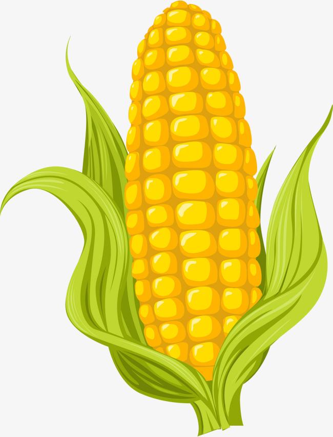 Cartoon Yellow Corn, Cartoon Clipart, Corn Clipart, Cartoon PNG.