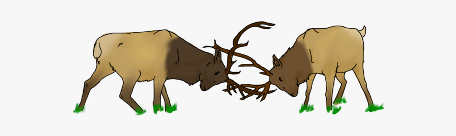 Two Elk Fighting Cartoon , Free Transparent Clipart.