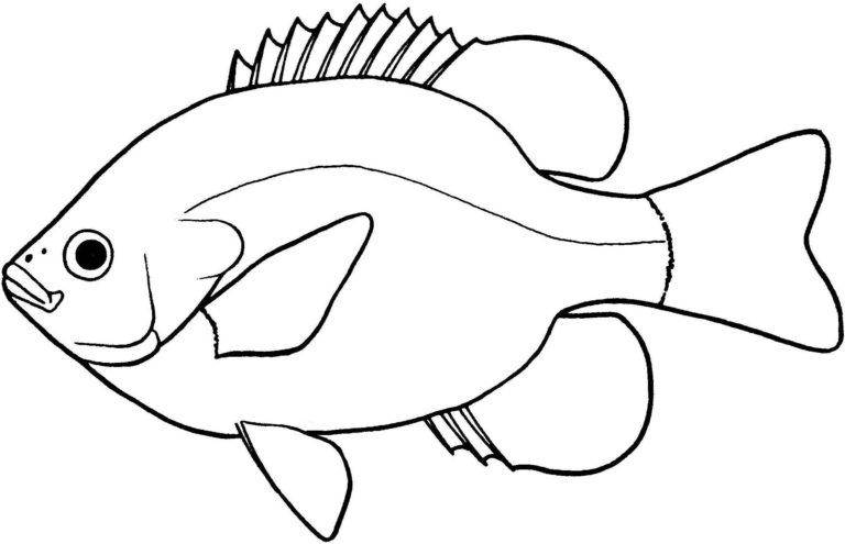 ➡ Fish Black And White Clip Art Images Download 2019.