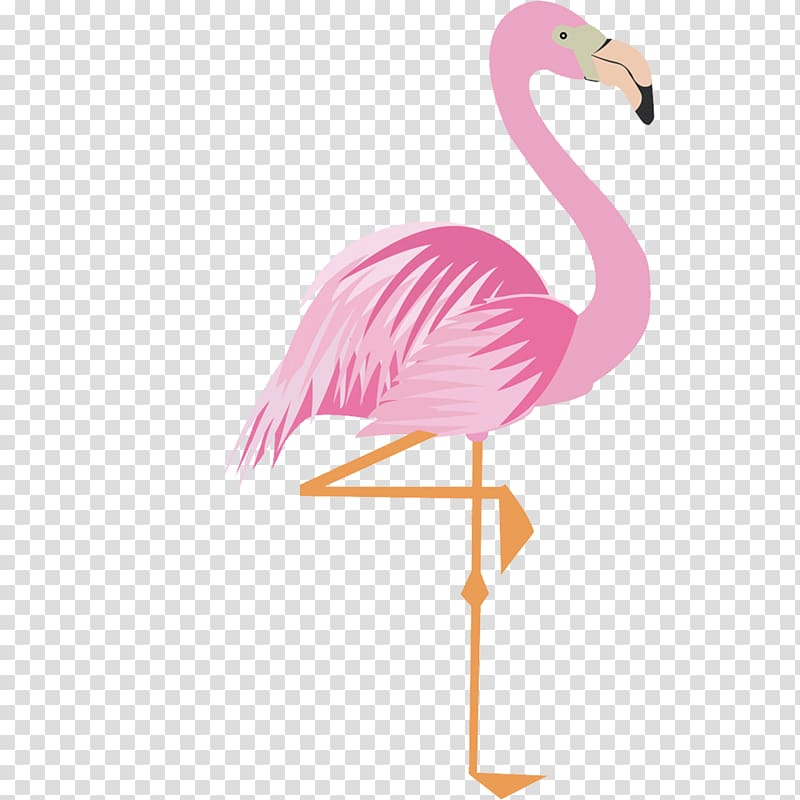 Pink flamingo, Greater flamingo Drawing Cartoon, Pink.