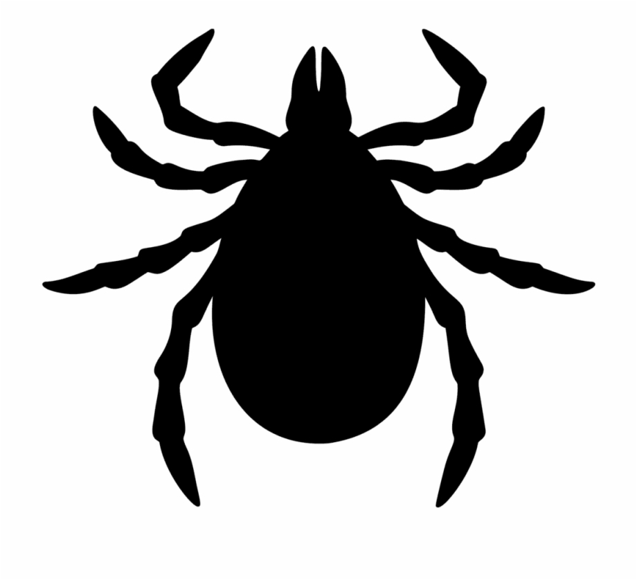 Fleas Ticks Cartoon Tick Bug.