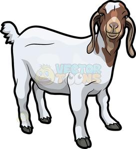 A friendly looking goat.