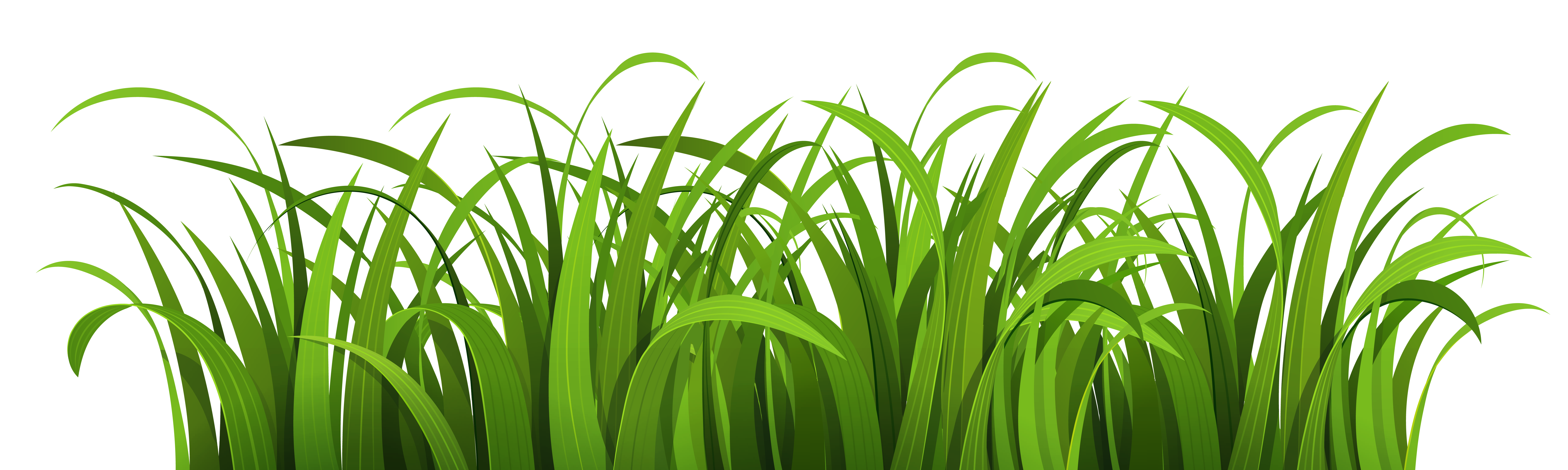 Grass PNG Image.