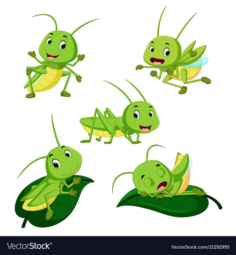 Set collection grasshopper cartoon.