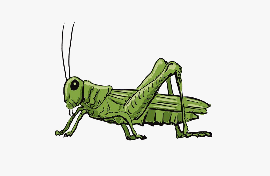 Animated Grasshopper Png Clipart Background.