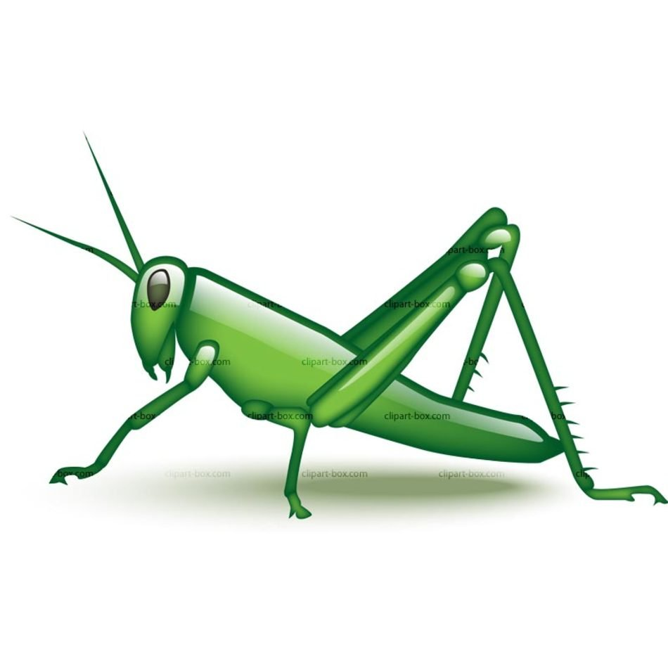 Cartoon Grasshopper Clip Art N7 free image.