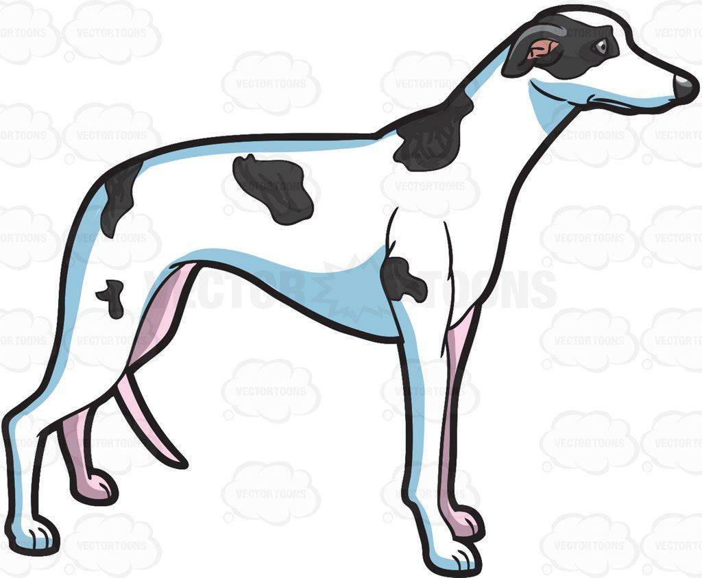 Cartoon greyhound clipart 5 » Clipart Portal.