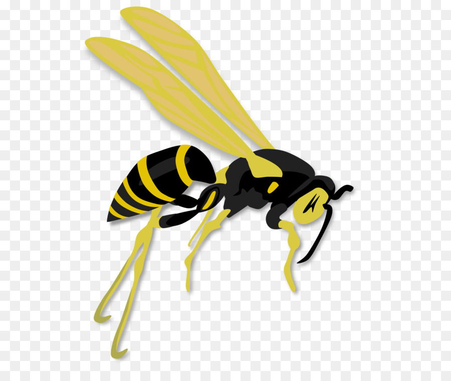 Cartoon Beetransparent png image & clipart free download.