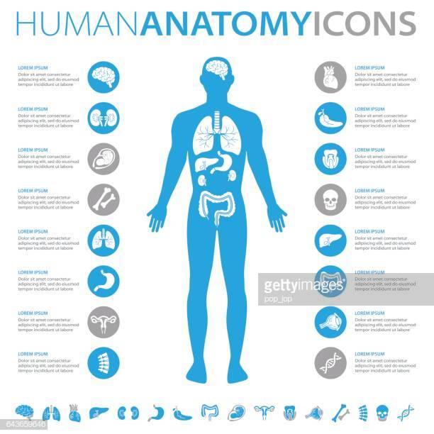 60 Top The Human Body Stock Illustrations, Clip art, Cartoons.