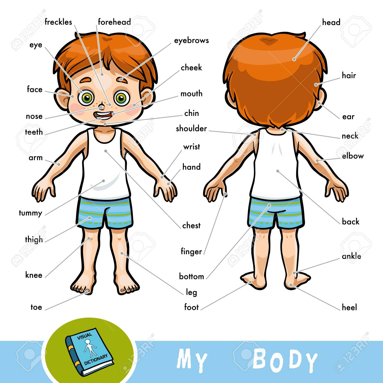Cartoon visual dictionary for children about the human body.
