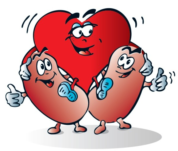 Free Kidney Disease Cliparts, Download Free Clip Art, Free.