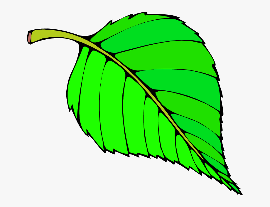 Big Leaf Clipart.