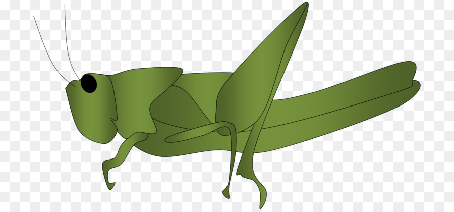Ant Cartoon png download.