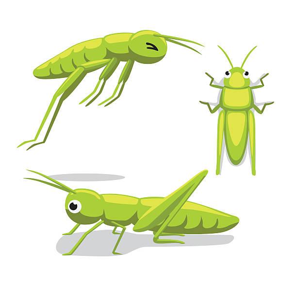 Best Locust Illustrations, Royalty.
