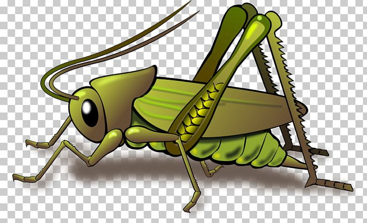 Cricket Grasshopper Insect PNG, Clipart, Animation, Arthropod.