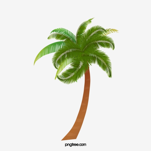 Palm Tree PNG, Palm Tree Leaves Vectors, Clipart Images.