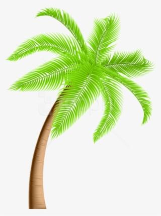 Cartoon Palm Tree PNG, Transparent Cartoon Palm Tree PNG Image Free.
