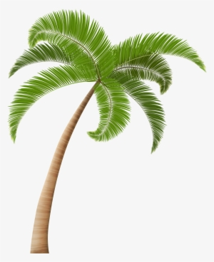 Palm Tree PNG Images.
