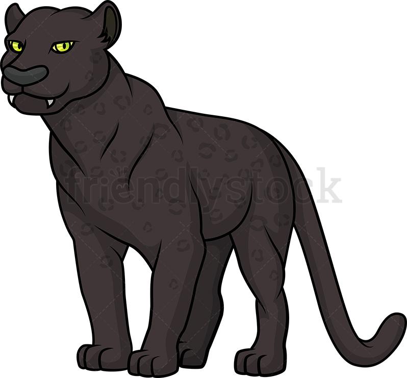 Wild Black Panther.