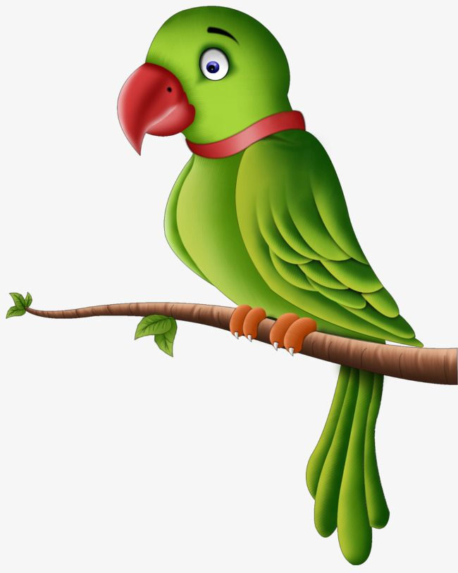Branches On The Parrot.
