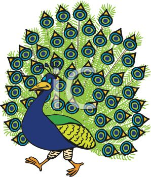 Cartoon Peacock Clipart.