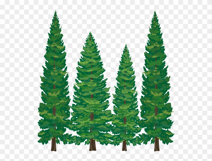 Pine Tree Clipart Softwood.