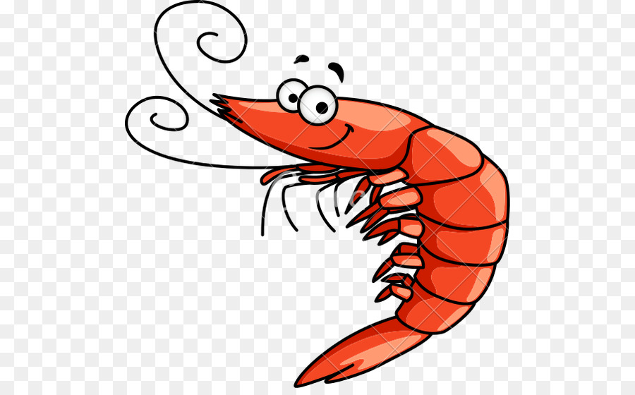 Shrimp Cartoon png download.