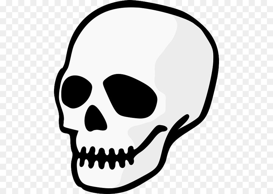 Human Skull Drawing png download.