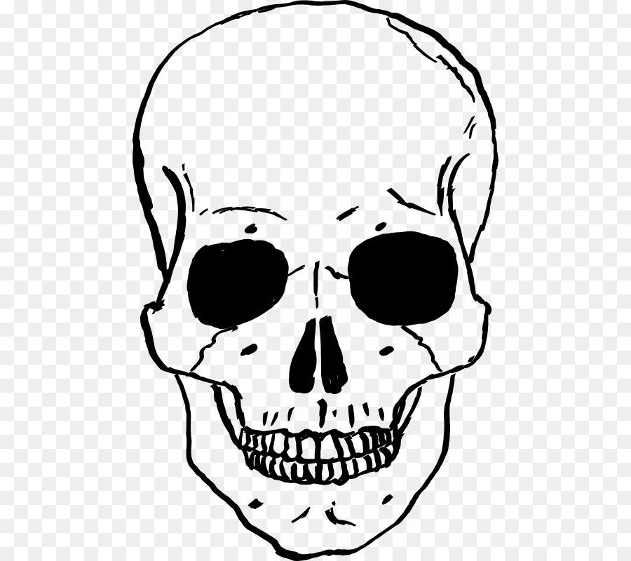 Skull Sketchtransparent png image & clipart free download.