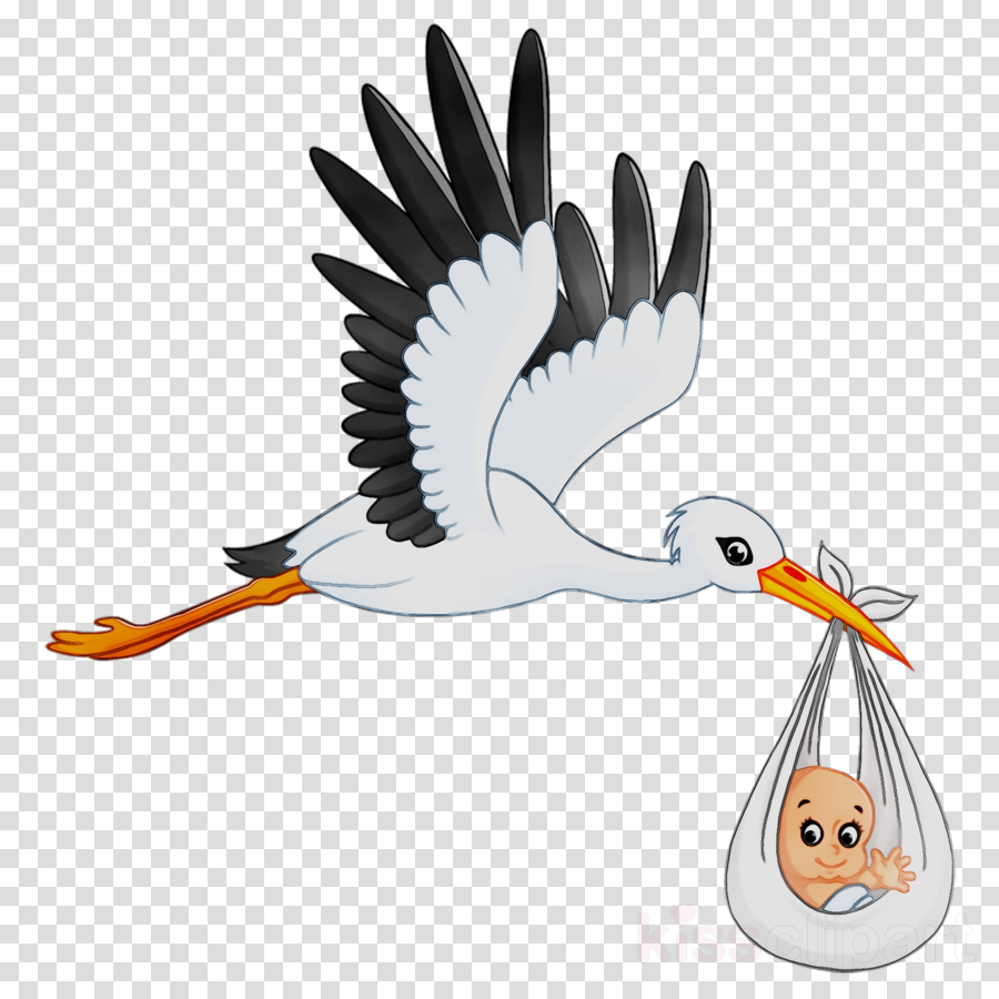 Cartoon Birdtransparent png image & clipart free download.
