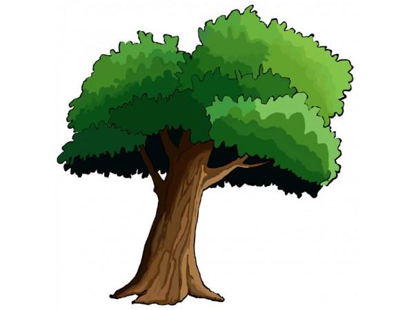 Tree Cartoon Png.