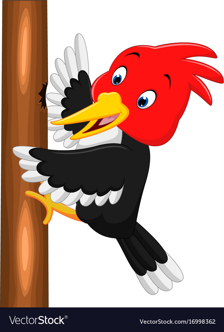 Woodpecker bird cartoon vector image.