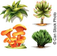 Caryophyllales Vector Clipart EPS Images. 28 Caryophyllales clip.