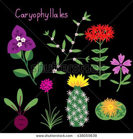 elyomys's Portfolio on Shutterstock.