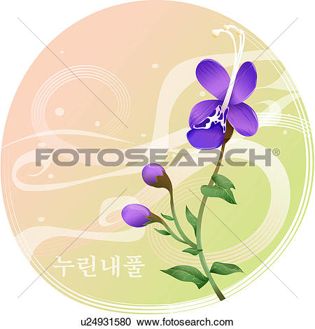 Clipart of flowers, caryopteris divaricata, flower, plants, plant.