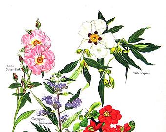 Garden encyclopedia.