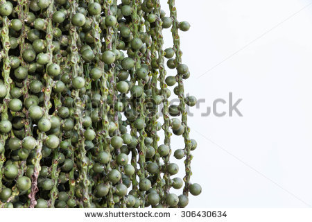 Caryota Stock Photos, Royalty.