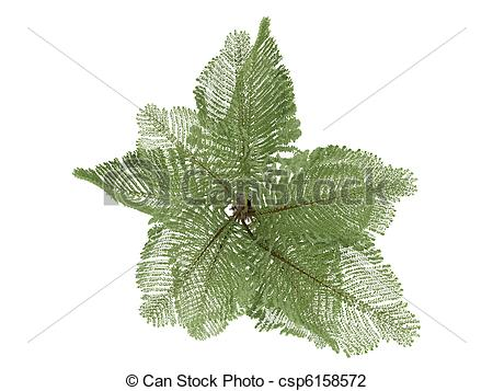 Clip Art of Giant Mountain Fishtail Palm or Caryota gigas.