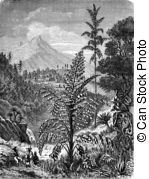 Caryota Stock Illustration Images. 9 Caryota illustrations.