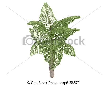 Stock Illustration of Giant Mountain Fishtail Palm or Caryota.