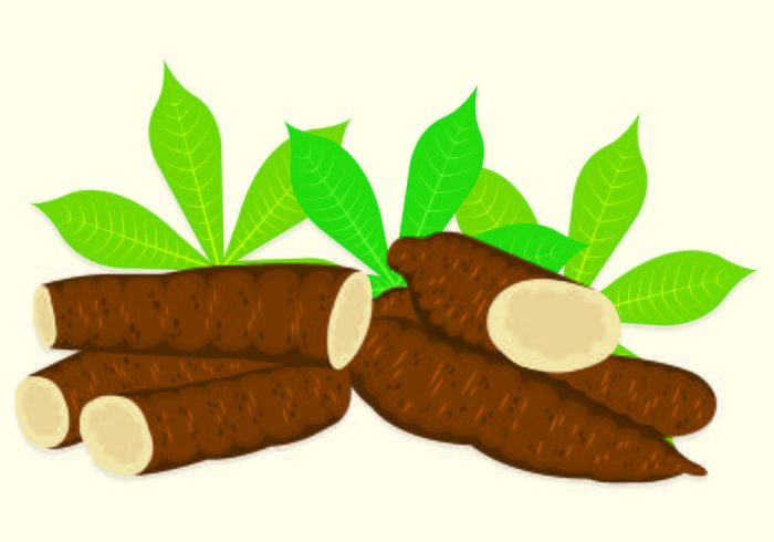 Vector Illustration Of Cassava.
