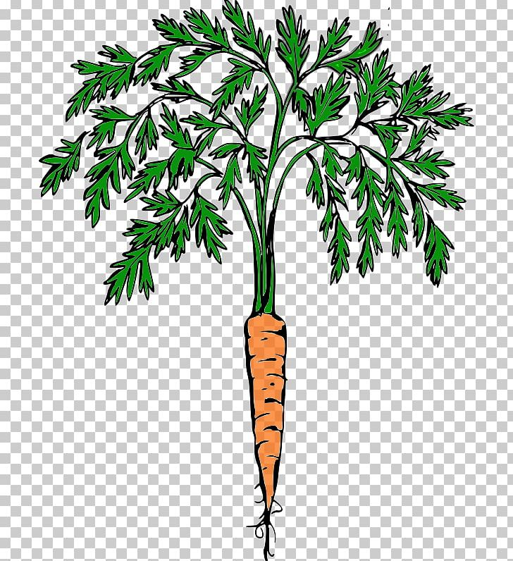 Carrot Cash Crop Food PNG, Clipart, Branch, Carrot, Cash.