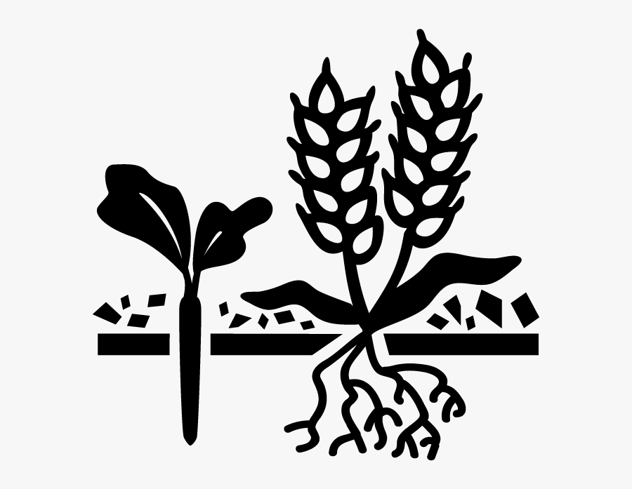 Cash Crops Black And White , Free Transparent Clipart.