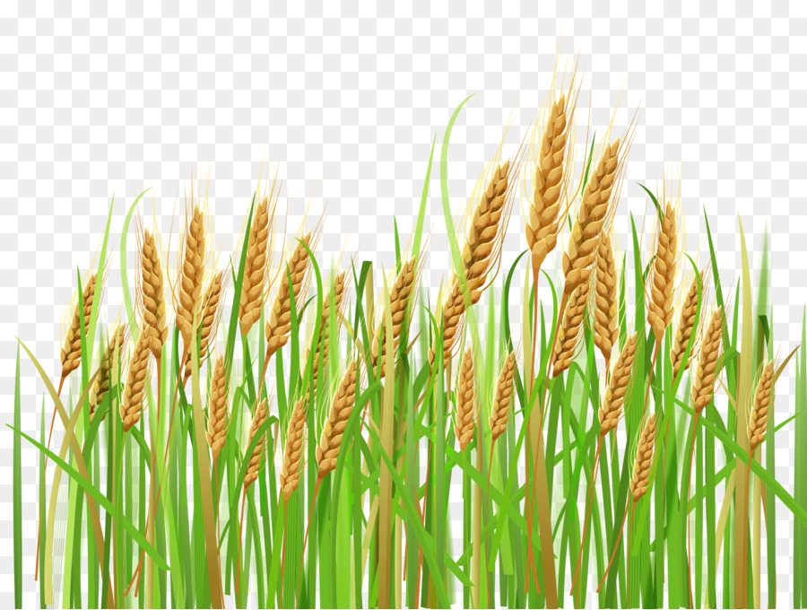Crops clipart wheet, Crops wheet Transparent FREE for.
